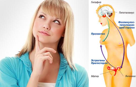gormony-v-zhenskom-organizme3