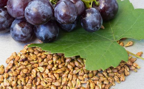 kotsochki-vinograda