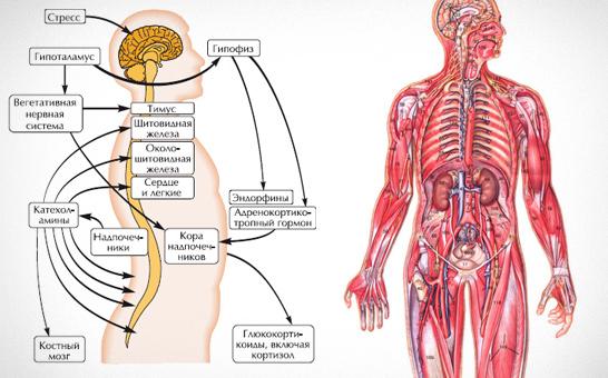 sress-vliyanie-na-organizm