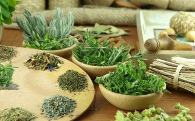 Травы для очищения организма: рецепты