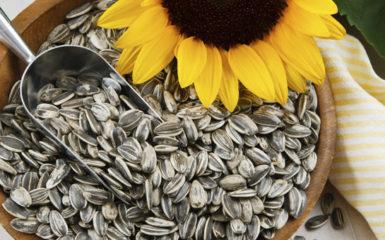Польза и вред семечек для организма